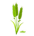 millet ears and grain pile in green color on white vector image vector image