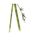 A view of bamboo vector image vector image