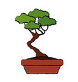 bonsai tree nature pot plant decoration vector image
