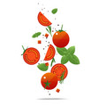 flying fresh tomatoes and spices concept vector image