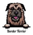 head border terrier - dog breed color image vector image vector image