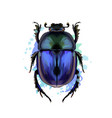 scarab beetle from a splash watercolor colored vector image vector image