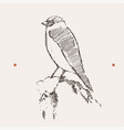 bullfinch bird merry year vector image