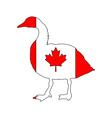 Canada goose vector image vector image