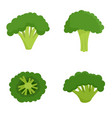 green broccoli icon set flat style vector image vector image