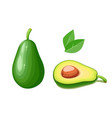 avocado tropical exotic vector image vector image