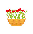 basket and flowers hearts vector image