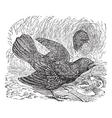 Bowerbird Vintage Engraving vector image vector image
