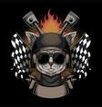 cat helmet motorcycle vector image