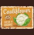cauliflower vegetable metal plate rusty cabbage vector image vector image