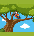 parrot bird on the tree vector image