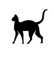 cat silhouette logo design vector image