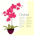 Coloful pink orchid in the pot vector image vector image