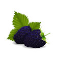 delicious juicy blackberry berries with leaves vector image