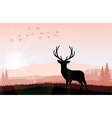 Silhouette a deer the feeding in the bright sunset vector image vector image