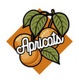 color vintage fruits emblem vector image vector image