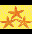 starfish on beach vector image vector image