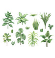 watercolor set with home plants isolated vector image