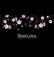 cherry blossom blooming sakura branches with vector image