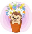 cute bahedgehog sitting in plant pot vector image vector image