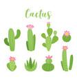 cute cactus vector image vector image