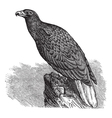 European Eagle Vintage engraving vector image