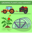 flat banner lettering growing plants and harvest vector image vector image