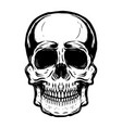 hand drawn human skull on white background vector image