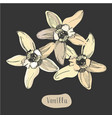 vanilla colorful flower isolated on the chalkboard vector image vector image