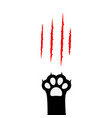 black cat paw print leg foot bloody claws vector image vector image