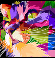 close up of face colorful cat vector image vector image