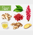 ginger transparent background set vector image vector image