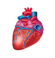 anatomical human heart icon with vessels and aorta vector image