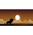 Lion in the evening vector image vector image