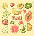 fruit pieces hand drawn doodle with papaya vector image