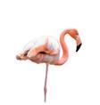 a flamingo vector image