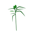 Fresh Sesame Plant on A White Background vector image vector image