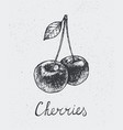 hand drawn cherries engraving style hand vector image vector image
