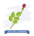 Isolated Flower vector image vector image