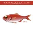 Sebastes Marine Food Fish vector image
