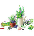 still life with aromatic herbs in pots and vector image vector image