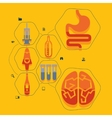 medical flat infographic vector image