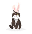 a cat with bunny ears vector image vector image