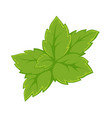 bright green leaves vector image vector image