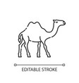 camel pixel perfect linear icon vector image vector image