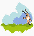 cartoon cute rabbit on grass vector image vector image