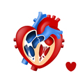 design love human heart in and out vector image vector image