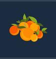mandarin set on background vector image vector image