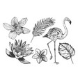 tropical flowers leaves flamingo set vector image