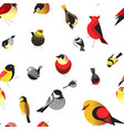 bird different types animals bullfinch seamless vector image vector image